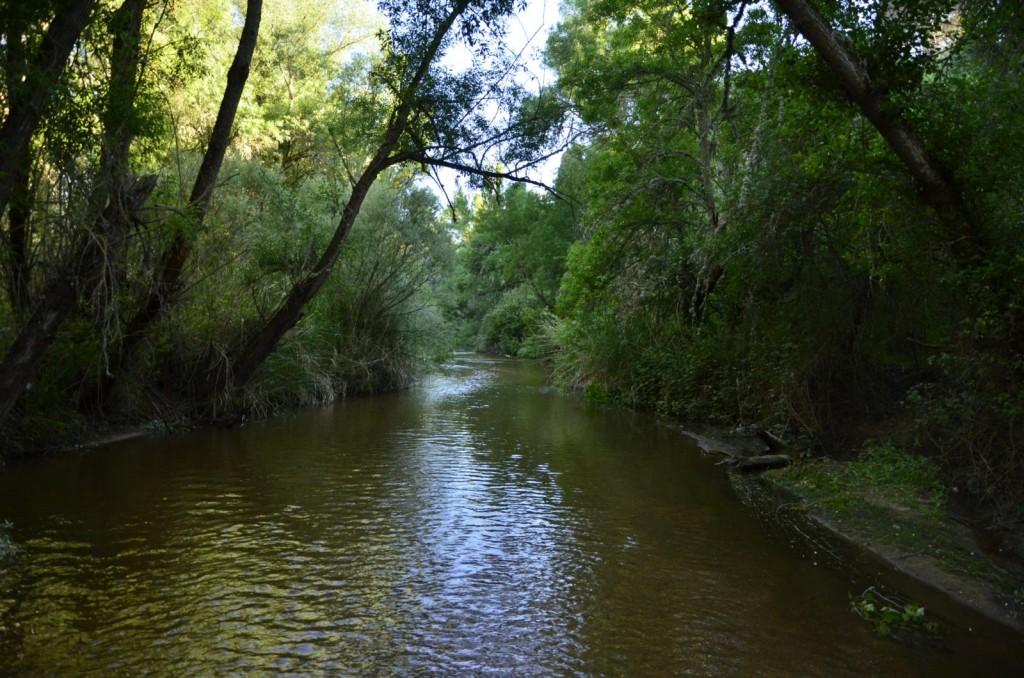 en el río Adaja II 1024x678 De paseo por el río Adaja