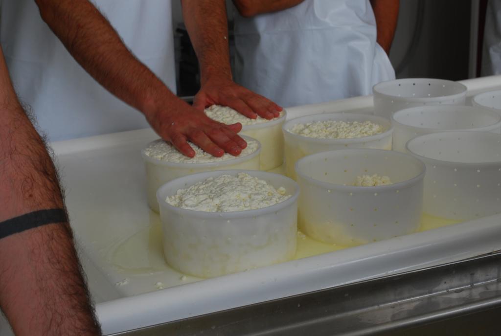 I Curso de quesos en Cantagrullas   m I Curso de queso en Cantagrullas