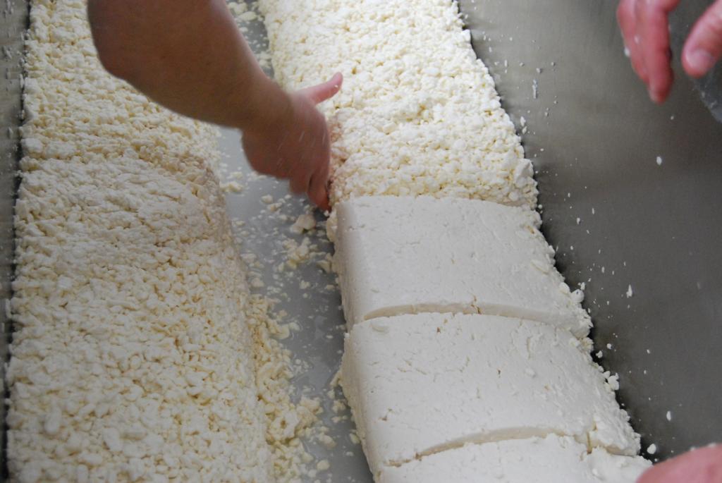 I Curso de quesos en Cantagrullas   v I Curso de queso en Cantagrullas