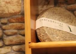 leche cruda de oveja queso_cantagrullas_Blog cantagrullas